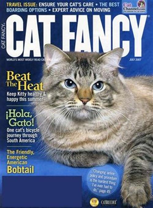 cats tidning